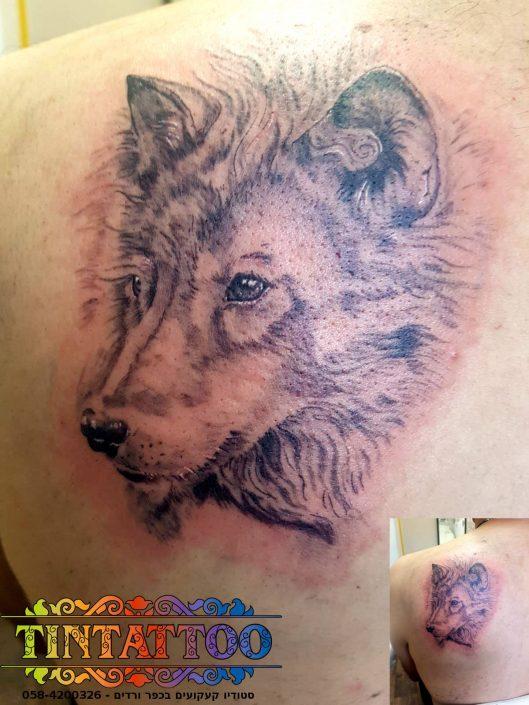 קעקוע זאב על השכם